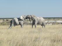 Fighting elephant giants Stock Photo