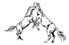 Fighting horses. Black and white vector outline Royalty Free Stock Images