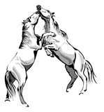 Fighting horses. Black and white vector outline Royalty Free Stock Photography