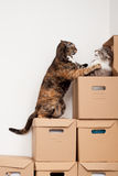 Fighting kitties. Kitties playing and fighting for hidden place Royalty Free Stock Photo