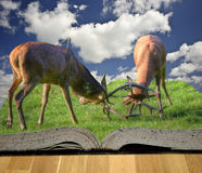 Fighting red deer stags in pages of magic book Stock Photo