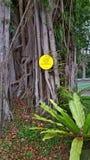 Figi drzewo x27 i bird&; s gniazdeczka paproć obrazy royalty free