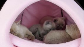 Figlarka bawić się w zwierzę domowe namiocie zdjęcie wideo
