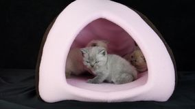 Figlarka bawić się w zwierzę domowe namiocie zbiory wideo