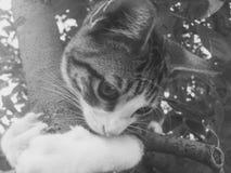 Figlarka czarny i biały zdjęcie stock