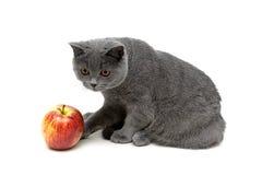 Figlarka i jabłko odizolowywający na białym tle Obraz Royalty Free