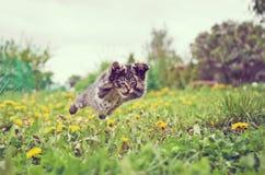 Figlarka skacze zdjęcie stock