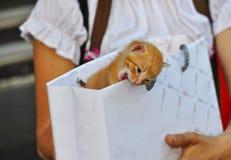 Figlarka w torbie zdjęcia stock