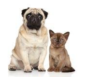 Figlarka wpólnie i pies Obraz Royalty Free