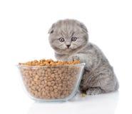 Figlarka z pucharem suchy kota jedzenie pojedynczy białe tło obraz stock