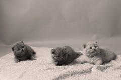 Figlarki bawić się na ręczniku, śliczne twarze zdjęcia stock
