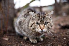 Figlarki i kota widok zwierzę Zdjęcie Stock