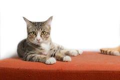 Figlarki obsiadanie na pomarańczowej tkaniny kanapie Fotografia Stock