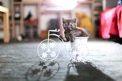 Figlarki obsiadanie w roweru kwiatu garnku Zdjęcia Stock