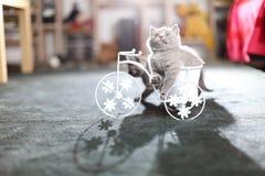 Figlarki obsiadanie w roweru kwiatu garnku Obraz Stock