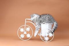 Figlarki obsiadanie w roweru kwiatu garnku Fotografia Stock