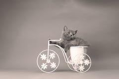 Figlarki obsiadanie w roweru kwiatu garnku Zdjęcie Stock