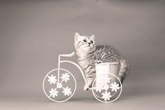 Figlarki obsiadanie w roweru kwiatu garnku Obrazy Stock
