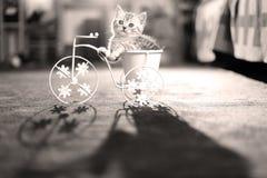Figlarki obsiadanie w roweru kwiatu garnku Obrazy Royalty Free
