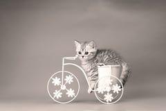Figlarki obsiadanie w roweru kwiatu garnku Zdjęcie Royalty Free