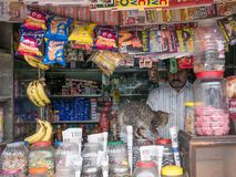 Figlarki odprowadzenie na kontuarze mały ulica sklep w Ooty, India Zdjęcia Stock