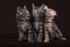 figlarki trzy Zdjęcie Stock