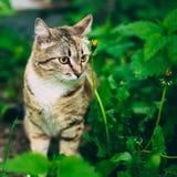 Figlarnie Ślicznego Tabby kota figlarki Szary Pussycat obraz stock