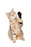 Figlarnie ciekawy kot Fotografia Stock