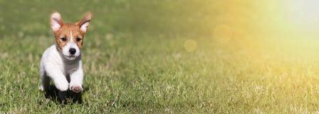Figlarnie działający szczęśliwy zwierzę domowe psa szczeniaka sztandar Fotografia Royalty Free