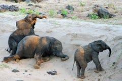Figlarnie dziecko słoń Fotografia Royalty Free