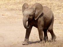 Figlarnie dziecko słoń Obrazy Royalty Free