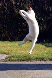 Figlarnie kot bawić się i skacze obraz stock