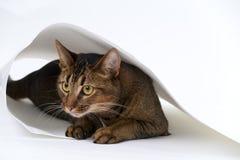 Figlarnie młody kot fotografia stock