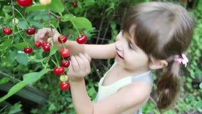 Figlarnie małej dziewczynki zrywania wiśnie zdjęcie wideo