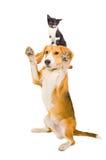 Figlarnie pies z figlarką obrazy stock
