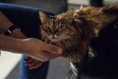 Figlarnie spojrzenie kot zdjęcie stock