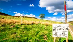 Figli sui prati negli altopiani della Scozia Fotografie Stock