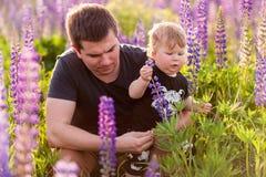 Figlio del bambino con il papà nel campo del lupino Fotografie Stock Libere da Diritti