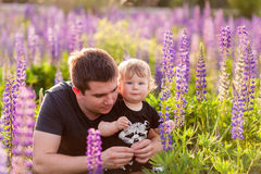 Figlio del bambino con il papà nel campo del lupino Fotografia Stock