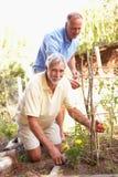 Figlio dell'adulto e dell'uomo maggiore che si distende nel giardino fotografia stock