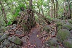 Figo mais estranho, Maui, Havaí Fotografia de Stock