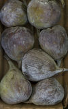 Figos frescos Foto de Stock Royalty Free