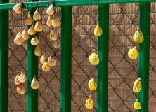 Figos que secam no sol, Espanha Fotografia de Stock Royalty Free