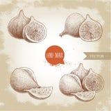 Figos tirados mão do esboço ajustados Desenho do fruto do estilo do vintage Foto de Stock