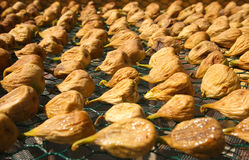 Figs. Rows of figs drying in the sun Stock Photography