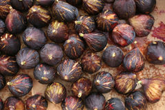 figs Royaltyfria Foton