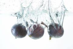 figs arkivfoton