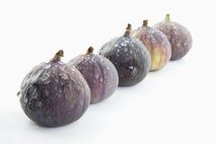 figs fem Fotografering för Bildbyråer