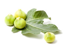 Figs on fig-leaf Stock Image