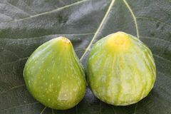 Figs on fig leaf Royalty Free Stock Photos